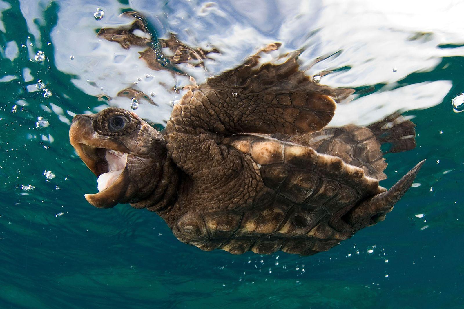 09_sea_turtle