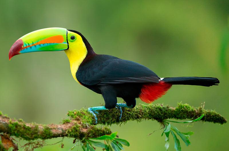 tucan-pico-iris